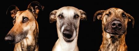 chien selfie fbcouv.com