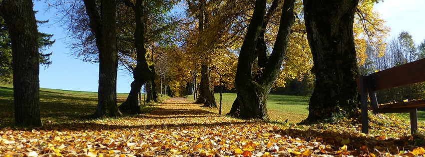 couverture-facebook-forêt--automne-feuilles-arbres-coloré-allgau