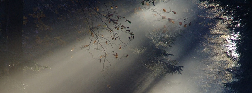 couverture-facebook-rayon-de-soleil-brouillard-l'automne-nature-foret-sunbeam