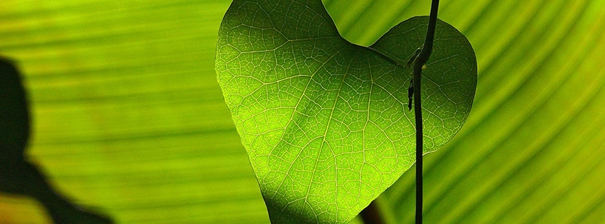 couverture-facebook-Amour-Vert-Feuille-Coeur-Shadow-Play-green