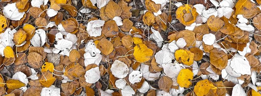 couverture-facebook-feuille-peuplier-feuilles-de-tapis-automne-leaf