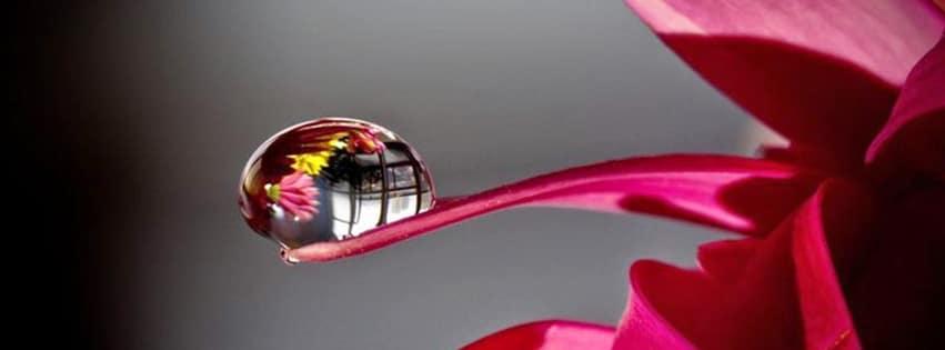 couverture-facebook-goutte-eau-pétale-fleurs