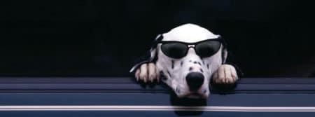 chien lunette soleil fbcouv.com