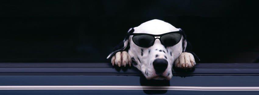 Une couverture Facebook d'un chien avec à lunette de soleil. Tranquille ces lunettes lui donne une classe folle et il ne se prive pas de la montrer.