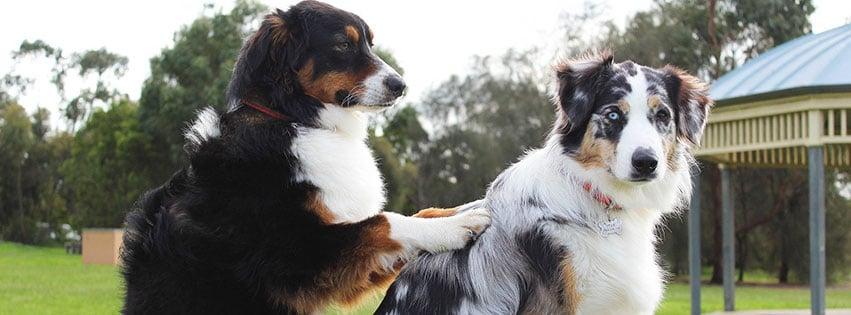 amis bestfriends BFF animal compagnie massage fbcouv.com