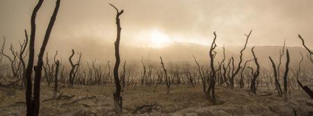 arbres morts sec déserts bois tronc dead trees fbcouv.com