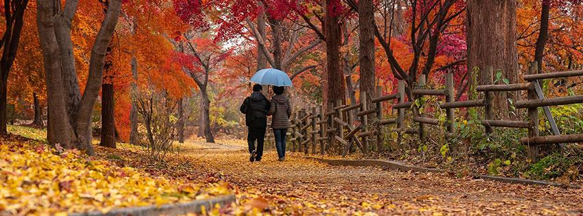 couple vieux automne feuilles érable   forêt fbcouv.com
