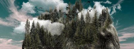 éléphant forêts nature fbcouv.com