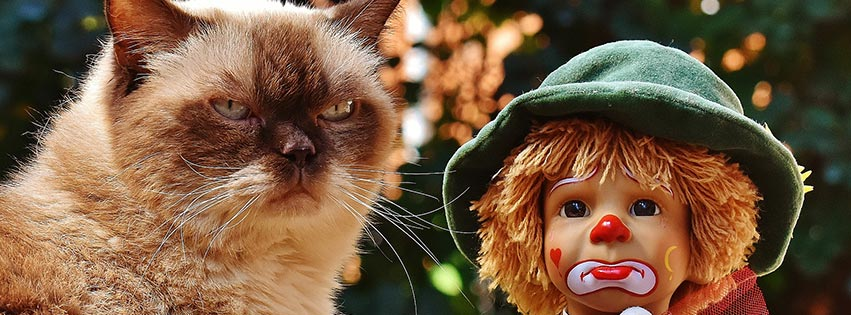 poupée clown triste cat chat british  shorthair course doll fbcouv.com